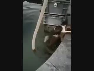 Храбрый пес спас тонущего кота.