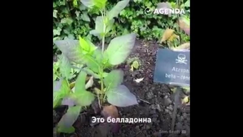 А пойдём-ка мой любимый неверный муженёк погуляем в садик, понюхаем цветочки...