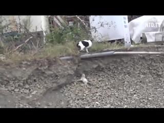 Чужих детей не бывает, или как кошка спасла щенка!