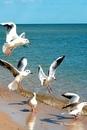 Никогда не перестану изумляться красоте моря. Глядя на него…