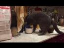 Мой кот- кофеман😂😂😂люблю не могу