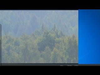 H9 лес 4мп SW1025 06/11/18 18^00