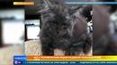Кот с человеческим лицом разделил пользователей сети