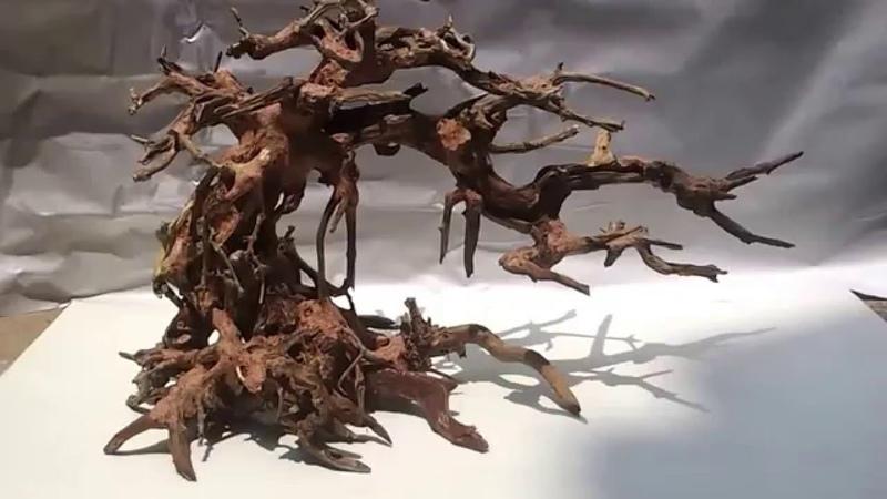 Bonsai driftwood tree for Bucephalandra