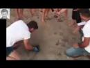 Kivanc Tatlitug ❖ Mavi ❖ Indigo Sea Turtles ❖