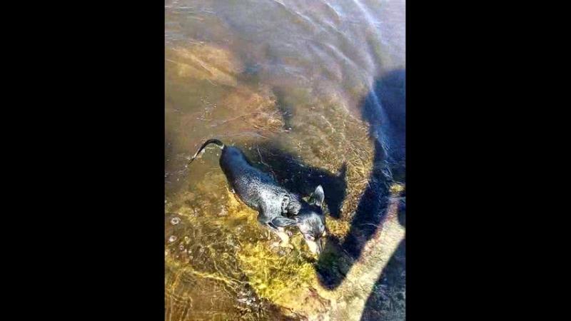 Венин заплыв на Семеновском озере)