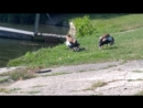 Семейство нильских гусей наслаждается отдыхом на немецком пляже