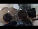 Осака океанариум контактный зоопарк 3