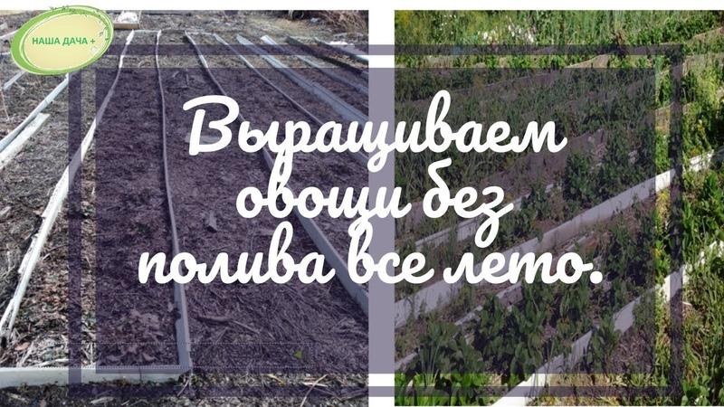 Выращиваем овощи без полива всё лето. Часть 1. Кольцова Ирина.