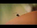 Насекомые Минускулы Minuscule 2012 61-80 серии