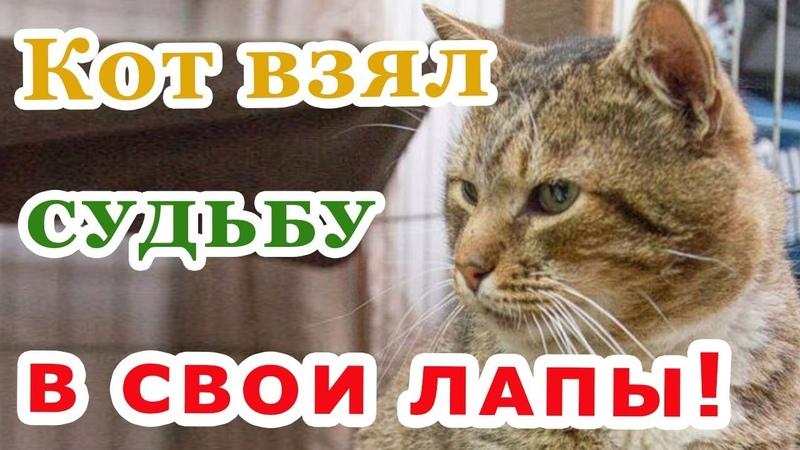 Как кот Вася держал за свитер мужчину, который едва не прошёл мимо…