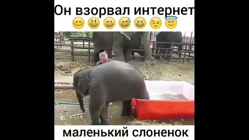 слоник купается