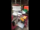 Ковчег общественное движение помощи животным Live