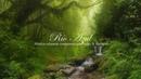 Música Relajante para Aliviar El Estres: Música de Piano, Música para Dormir y Relajarse ☼14