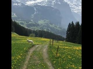 Прогулка_в_Швейцарии.mp4