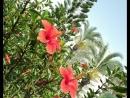 Махмутлар...Вальс цветов...