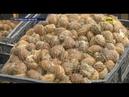 В Україні нині вигідно вирощувати слимаків