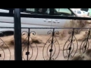Kahramanmaraş da inanılmaz sel manzaraları 3