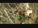 Мышка с дятлом