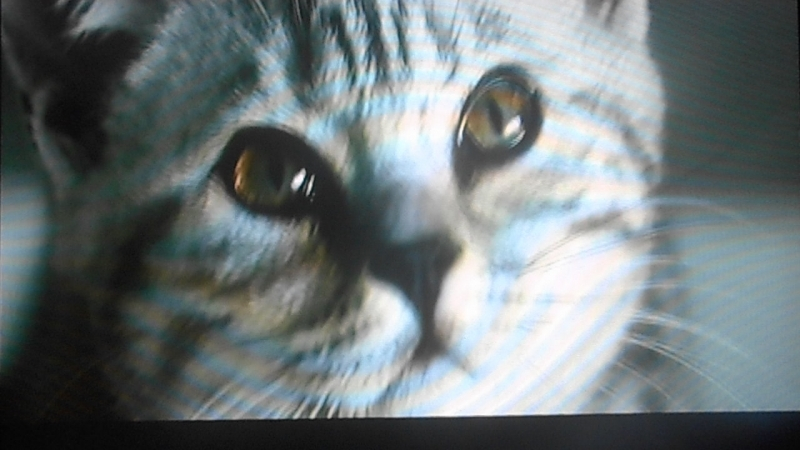 милый котёнок и его корм ВИСКАС