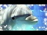 Звуки пеcни дельфинов