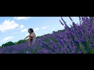 Cello in a lavender field