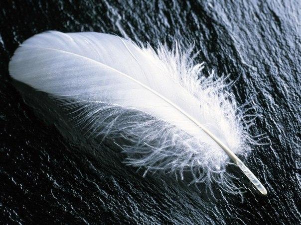 Немного о перьях...