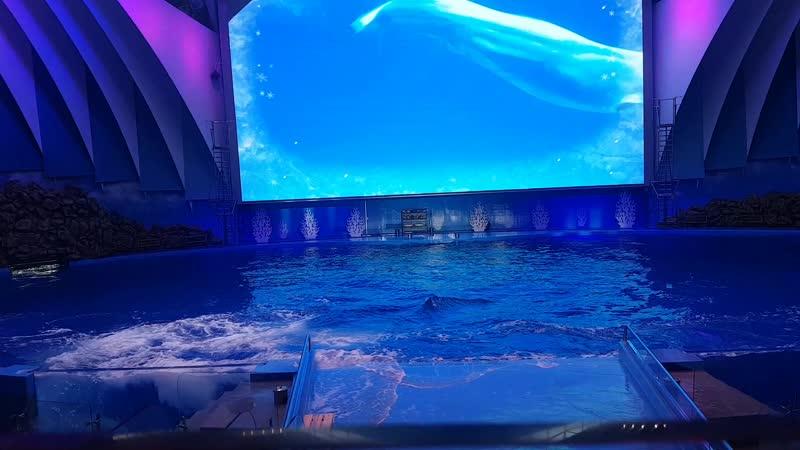 Приморский океанариум 1