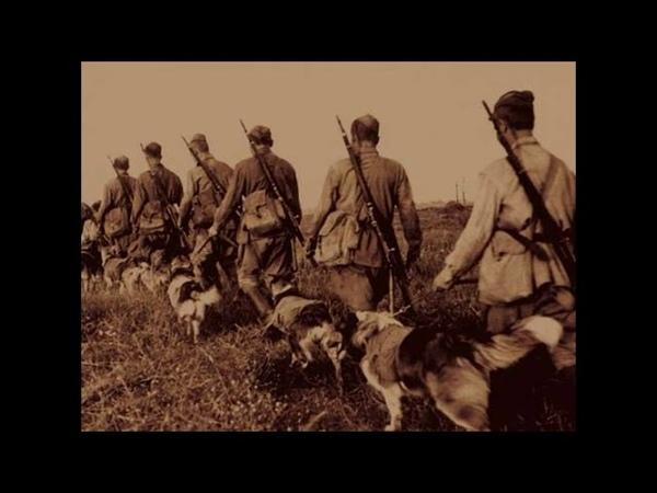Памятник 150 пограничным псам, которые рвали фашистов в рукопашном бою