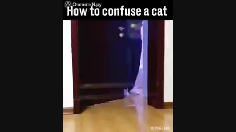 Как смутить кошку