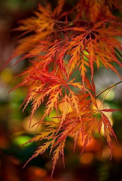 Осень - пора ненавязчивых разговоров, воспоминаний ярких красок уходящих летних дней, оставляющие манящий, приятный аромат...