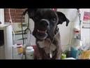 Пёс с Новосиликатного