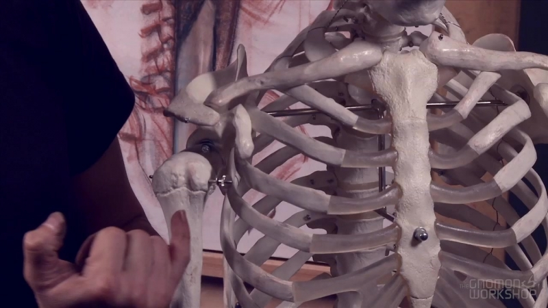 The Gnomon Workshop Anatomy Workshop (Volume 5) 8. Muscles of the Human Back – Part 2