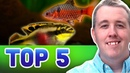 TOP 5 SEMI AGGRESSIVE AQUARIUM FISH