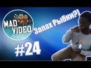 Mad Video: Лучшие ролики недели 24 Когда учуял запах РЫБКИ