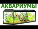 Магазин АКВАРИУМ (аквариумы, рыбки, корма) - г. Тверь, Тверской пр-т, 5 Тел.: (4822) 777-404