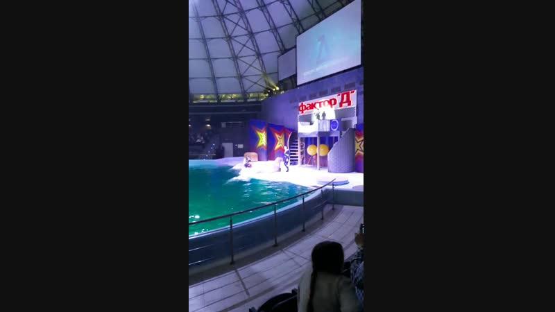 танец моржихи с белым китом