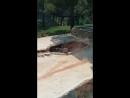 Тигры в Сафари парке г. Геленджик