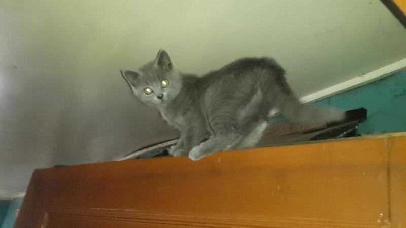 Мой котик Яша часть 2