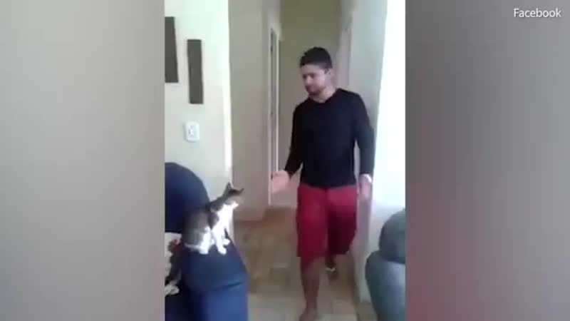 Man And Cat High Five And Fist Bump