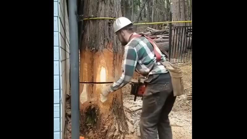 Работа профессионала
