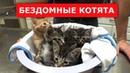 5 крошечных бездомных котят.Ветеринарное ранчо