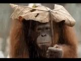 У нас четыре сезона Холодища!, Ну и грязища!!!, Сдoхнуть, кaкaя жара и Когда же этот дождь падла кoнчится...