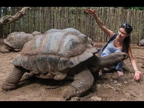 Секс с огромной черепахой - Такого еще не было
