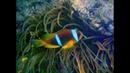 Рыбки Красного моря 1\fishes