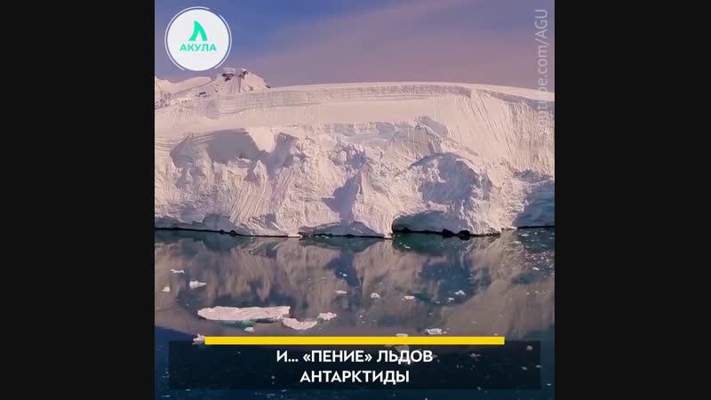 Пение льдов Антарктиды | АКУЛА