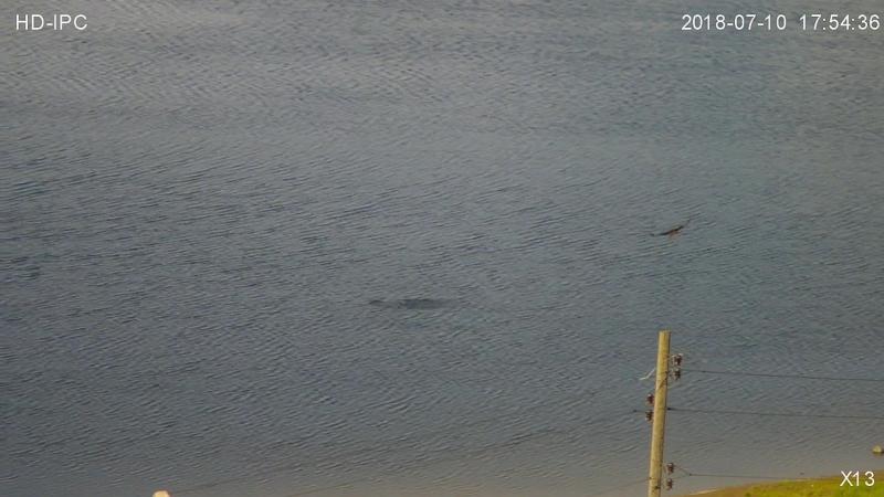 Конюк Сарыч рыбачит рядом с пляжем в Заречном