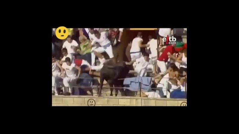 бык запрыгнул на арену