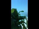 Ravi Aditya — Live