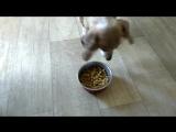 История о том как Артем собак кормил